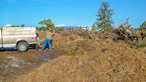 Man throwing plant clippings and yard debris into a large pile.