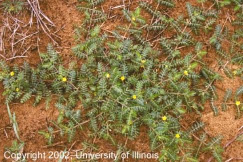Noxious Weeds | City of Bend